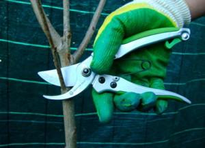 обрезка-растений