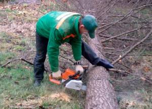 удаление-деревьев