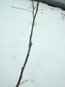 Удаление ветви отходящей под острым углом
