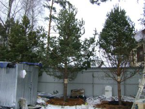5-дерево на новом месте